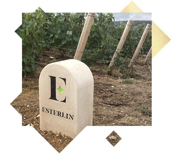 esterlin-borne-vigne